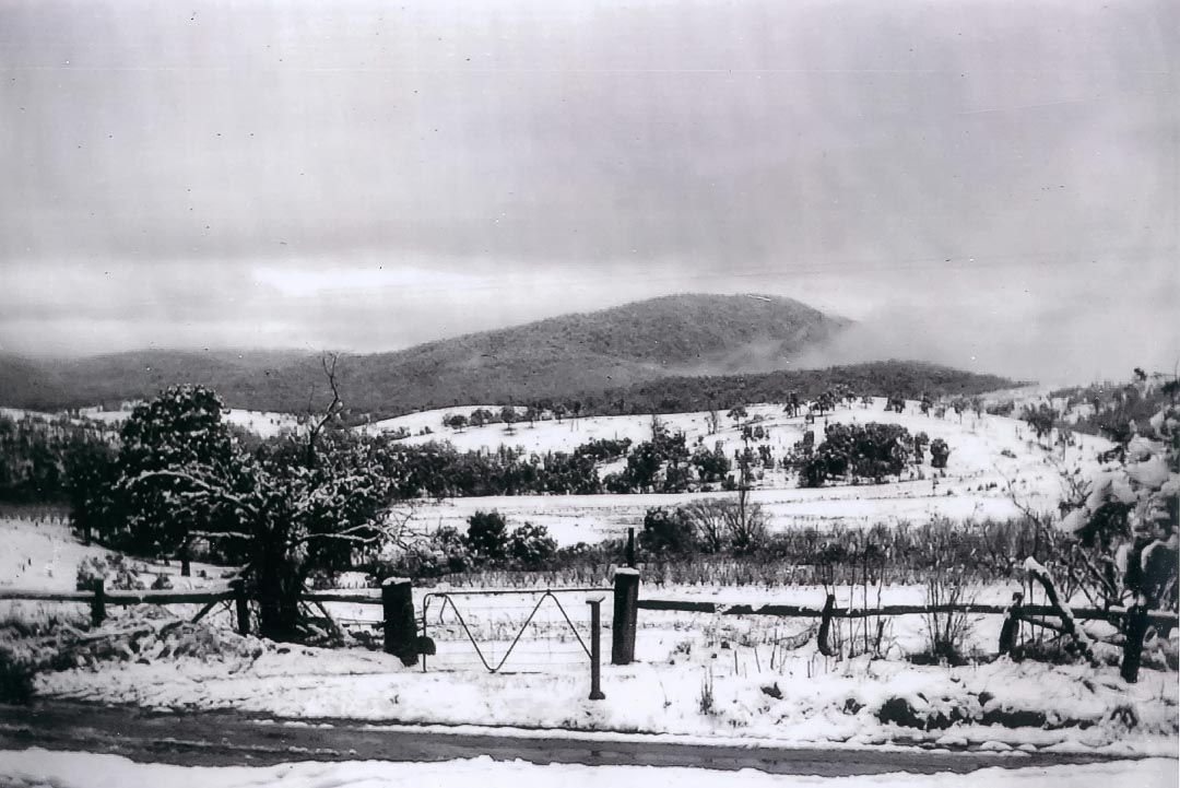 'Glen Ard' orchards covered by snow, 19th July, 1951