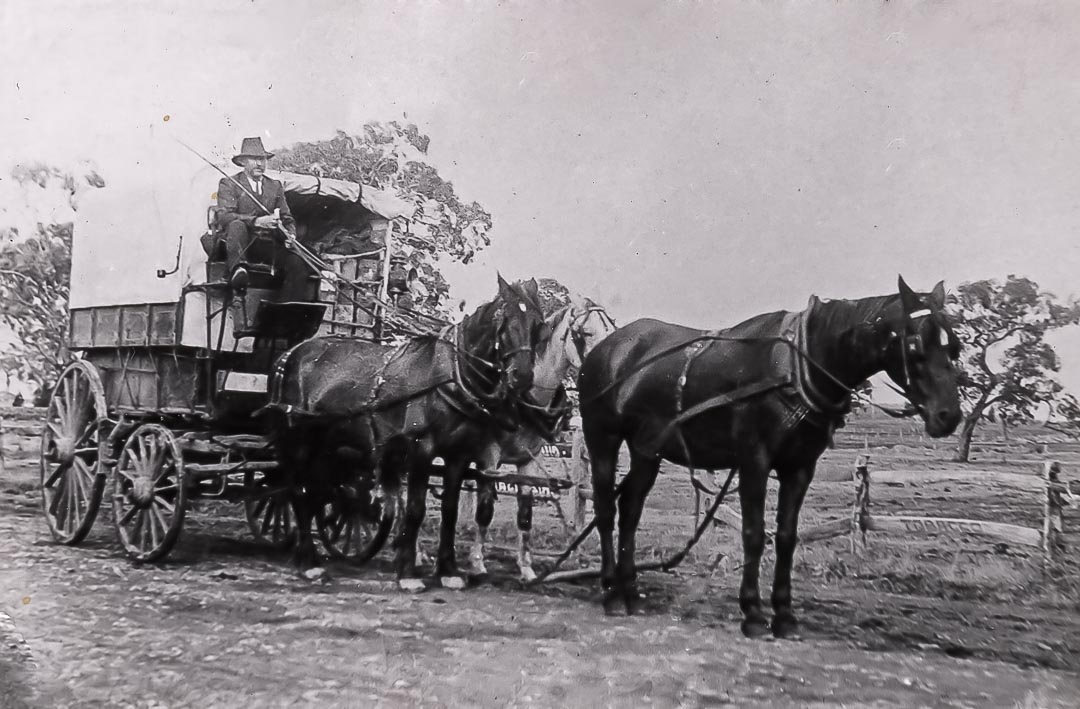 Fruit wagon with driver (thought to be James Mann) and horses, Arthurs Creek.  The Evelyn Observer of 1917 reported that a local fruit wagon was on its way home from market with a passenger sitting on the empty cases behind. Coming down one of the hills these slipped, and the passenger was deposited on the roadway… In October 1873 James Mann selected land on the upper reaches of the Arthurs Creek in the Parish of Queenstown which he named 'Lang Fauld Farm'. He was joined by John Mann in 1874 who selected adjoining land which he named 'Carseburn'