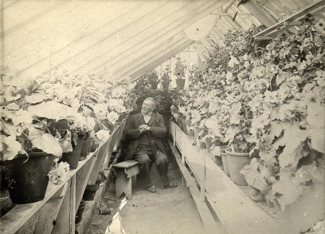 Charles Draper amidst his beloved begonias.  'His begonias at Charnwood were for many years the finest to be seen in Victoria'.  He was instrumental in bringing the first School of Horticulture in Australia into existence