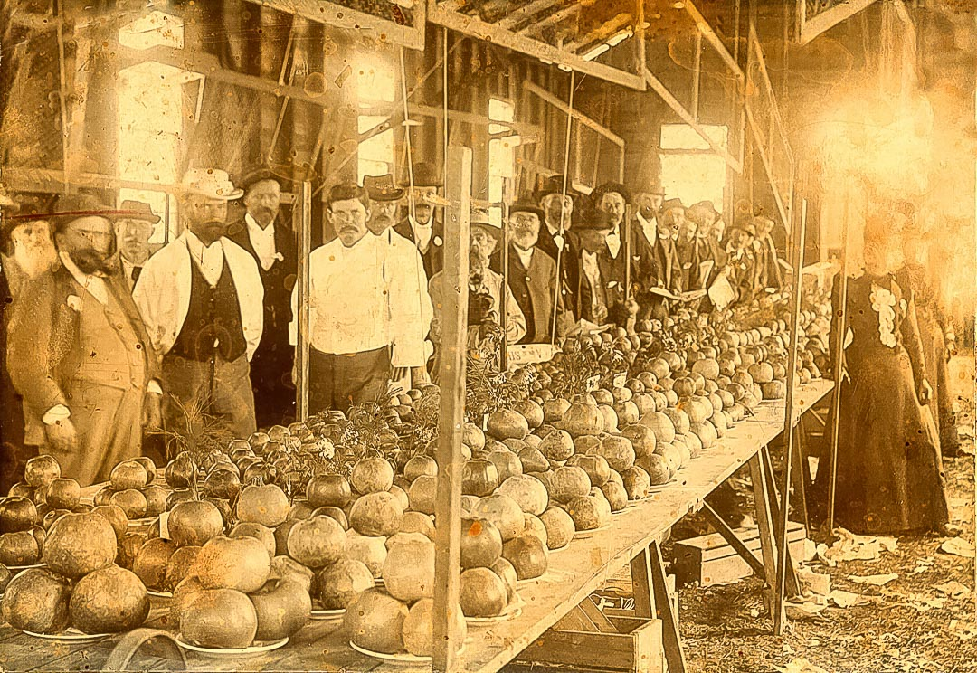 Diamond Creek fruit show in the Horticultural Hall in the 1890s.  The Arthurs Creek Fruit Growers' Association and the Diamond Creek Horticultural Society held meetings and demonstrations in the Horticultural Hall