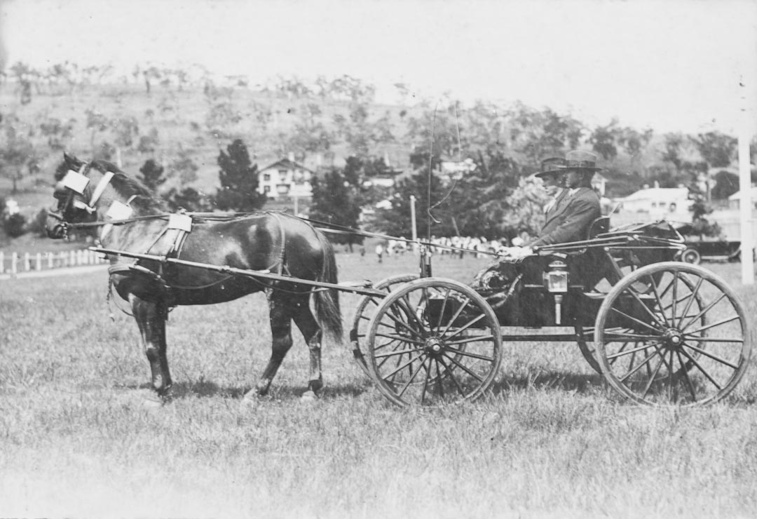A fine horse and carriage, Arthurs Creek district