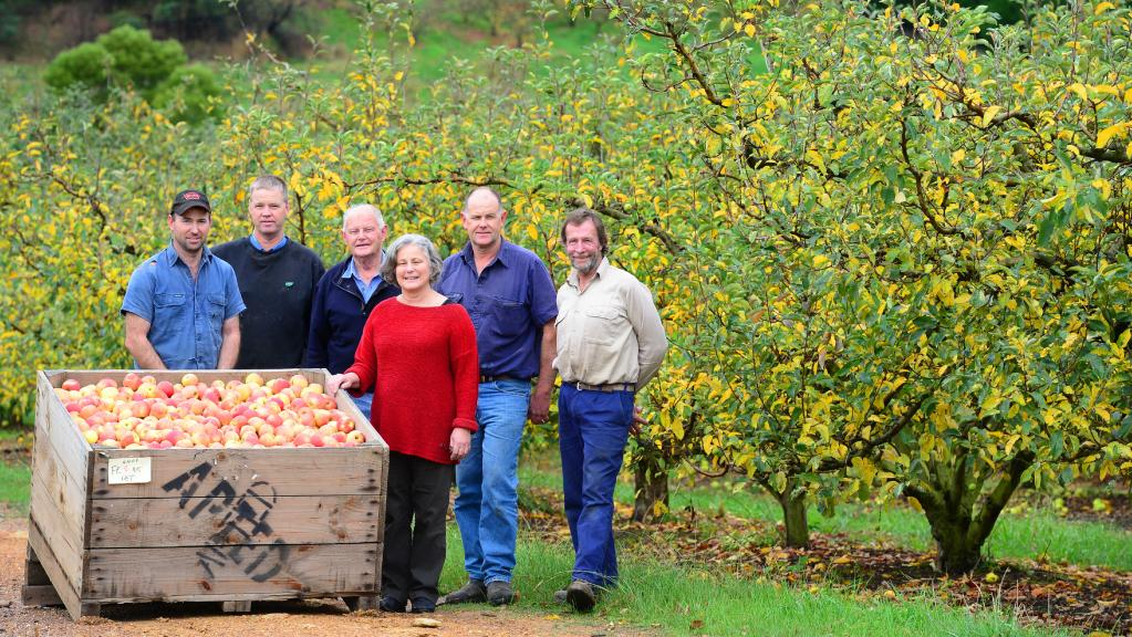 The Apted family have been growing apples, pears and lemons at Arthurs Creek, 45km north east of Melbourne, for well over 100 years. Pictured is Ben (left), Roger, Barry, Bronwyn, and Peter Apted and Eric South. Photo credit Zoe Phillips, The Weekly Times, 2015