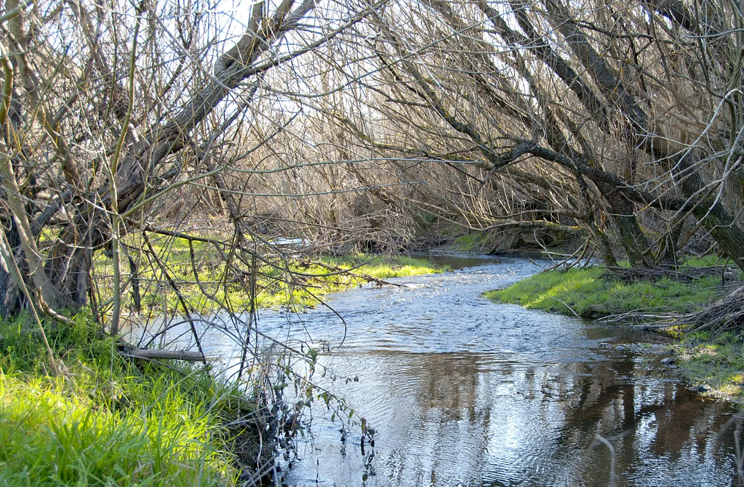 Willows growing by the water in rural Victoria