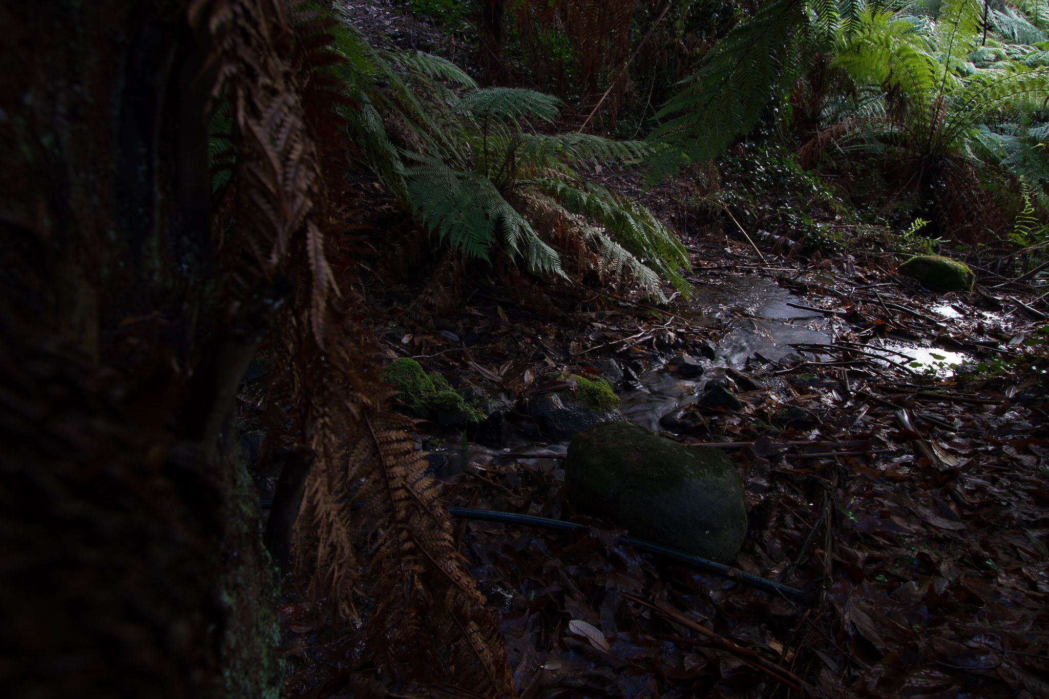 A feature of the valleys of the Arthurs, Running and Deep Creeks in the early years of settlement was the profusion of ferns along the sheltered banks of the streams and in moist gullies.  Photo credit Wade Ashley at Dygiphy