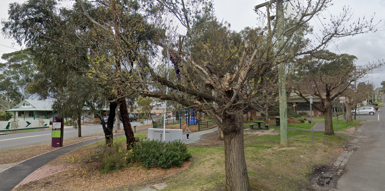 The three remaining elm trees at the lower end of Anzac Avenue, Hurstbridge, 2020