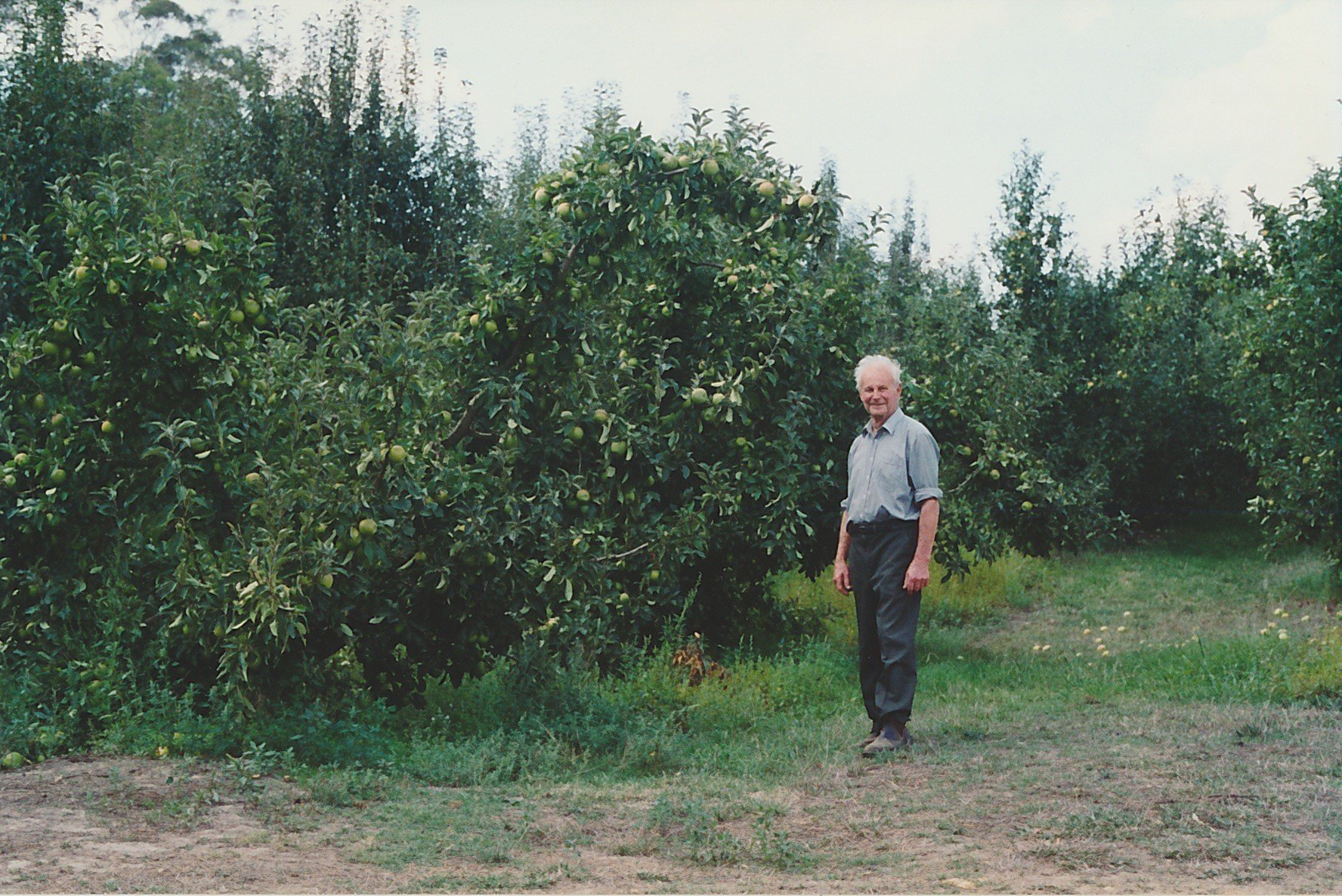 Lindsay Apted near the Granny Smith apple trees along the Arthurs Creek at 'Glen Ard'.  Bruce G. Draper, November 2003