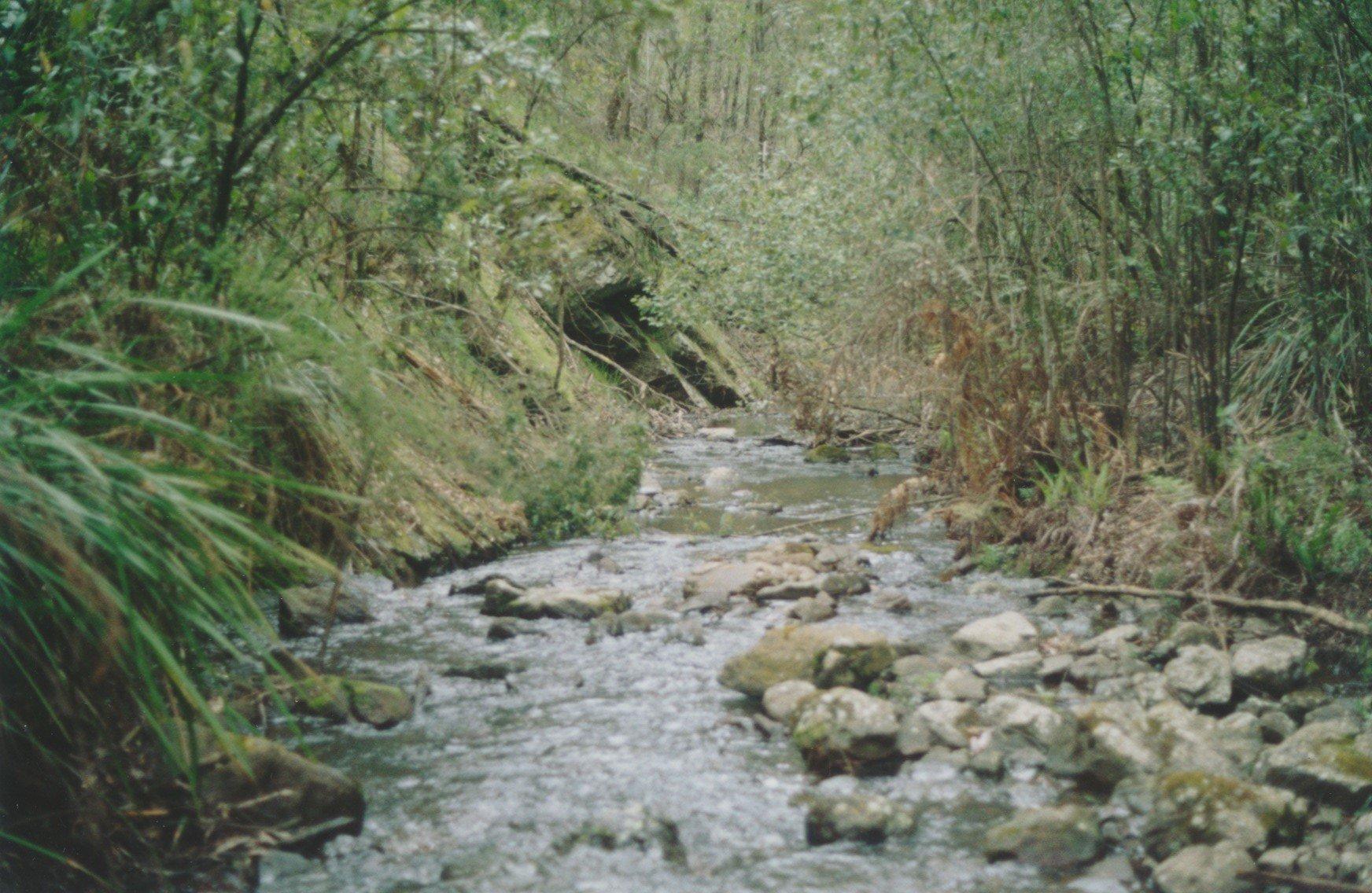 Running Creek, upstream from Sugarloaf reservoir in Kinglake National Park, 2003