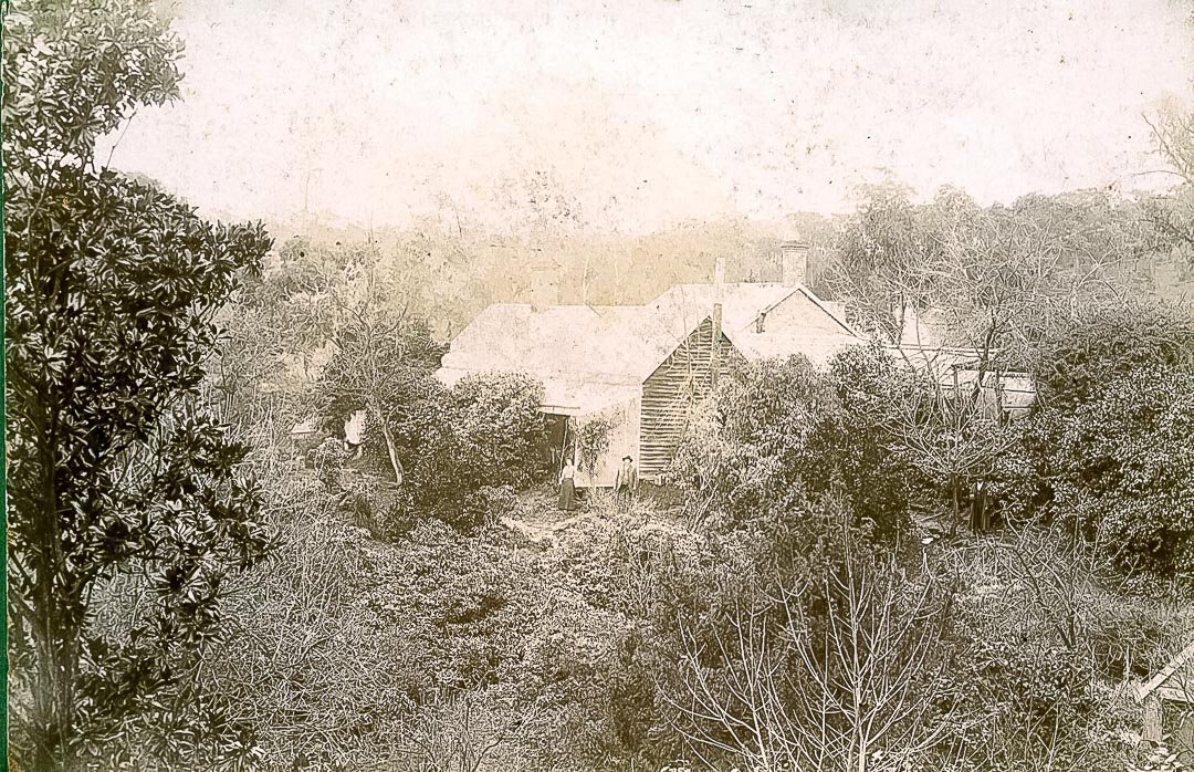 The garden at 'Charnwood' c 1900 with Charles Draper (1825 -1909) and Jessie Ellen Fisher (1867- 1933).  The Garden Gazette of 1902 wrote of its visit to Charnwood with camera and pencil 'confronting you on every side as you ramble through the winding paths are roses of every hue, mostly teas, with a few fine old favourites, as Madame J. Lang, Captain Christy, Paul Heyron, La France, and other hybrid perpetuals of fragrant beauty, dainty polyanthus roses, Cecile Brunner, Perle D'Or, and Marie Pavie, wonderfully robust standards with glorious heads of massive blooms that would make a city florist's fingers itch to pick them; and all growing at their own sweet will, yet tended with that consummate skill that removes all signs of neglect and decay, without destroying nature's handiwork with formal trimming and prim devices.'