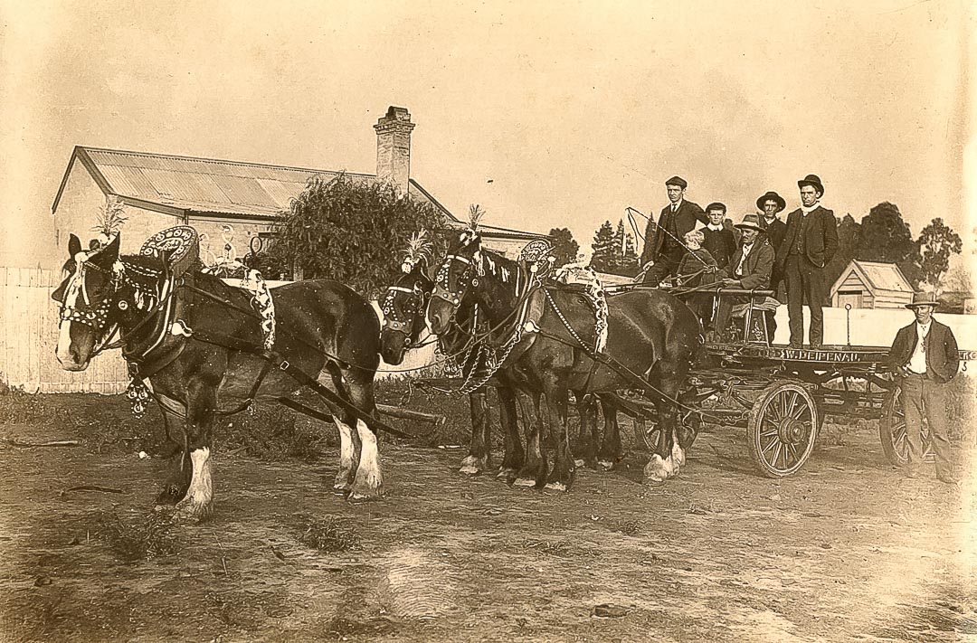An article in the Evelyn Observer of 16 February 1917 describes the orchardist―'who travels the long and weary roads in silent thought whilst his horses, the treasured friends and help-mate of man, pull a heavy laden vehicle to the Melbourne markets'.  Carrier's wagon, W. Deipenau, Sydney Road, Melbourne