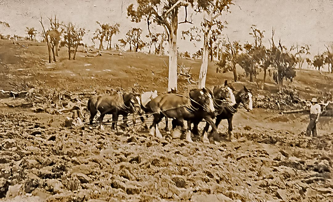 Ploughing new ground at 'Barton Hill', 1922.  Photo credit James Chester Draper