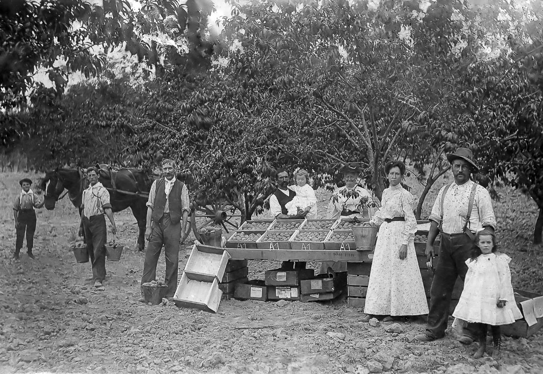 Arthurs Creek Fruit Growers c 1900