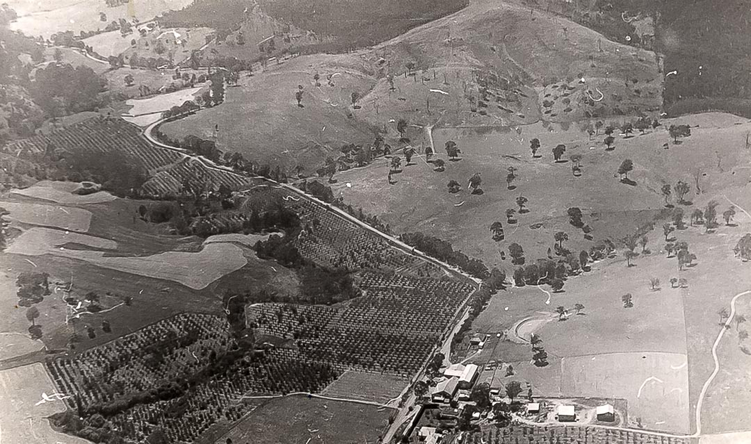 Arial view of Apted's 'Glen Ard' orchards along the upper reaches of the Arthurs Creek, 1960
