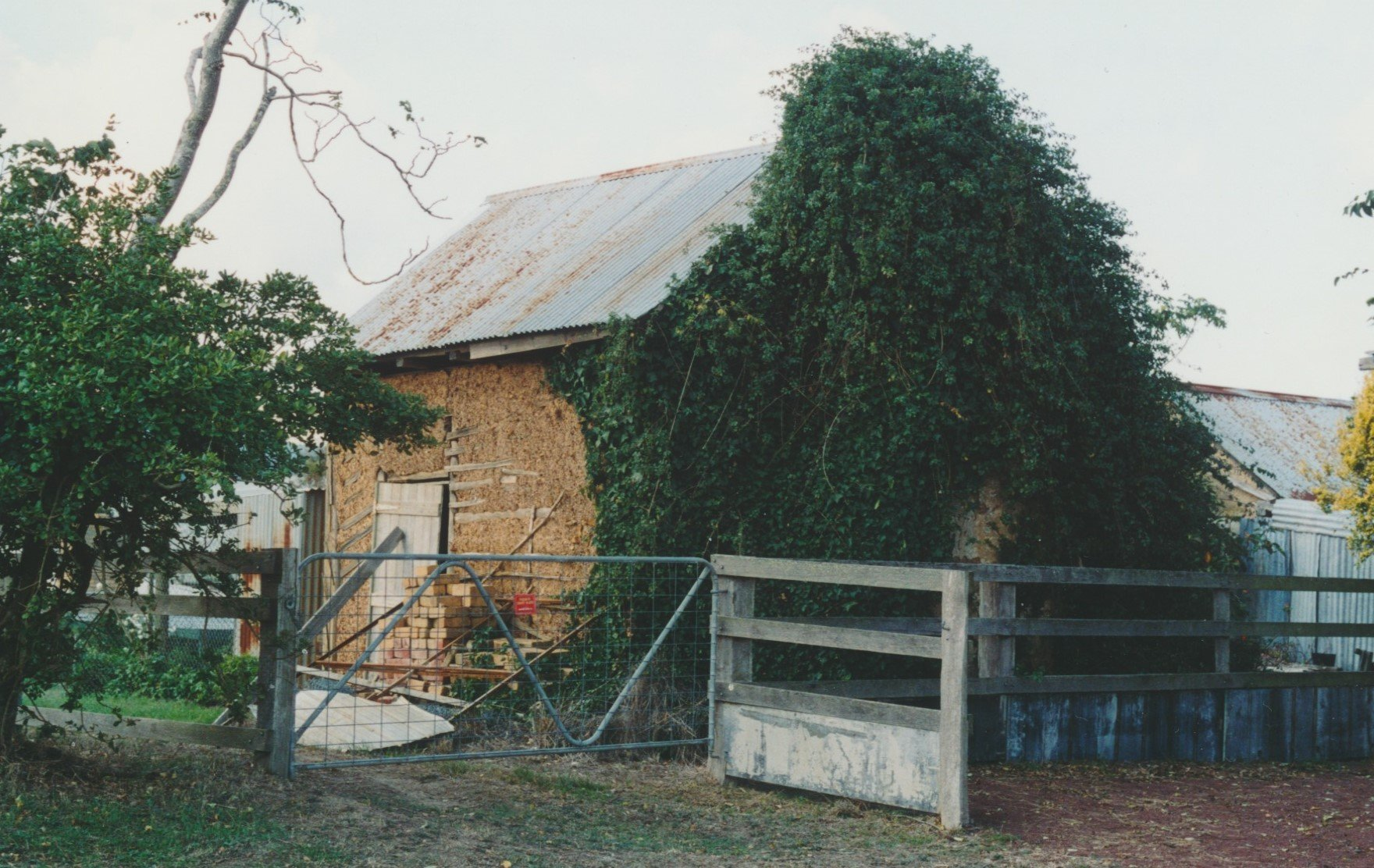While taking his Shorthorn bull home from Mr. Healey's property last week-end, Mr. Les Apted was suddenly attacked by the bull and tossed in the air. Old wattle and daub hut and kitchen of the Healey family house.  Bruce G. Draper, 2003