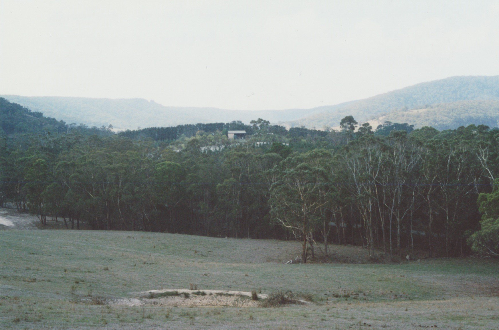 Looking across the former Horne orchards to the headwaters of Arthurs Creek and Pheasants Creek.  Bruce G. Draper, November 2003