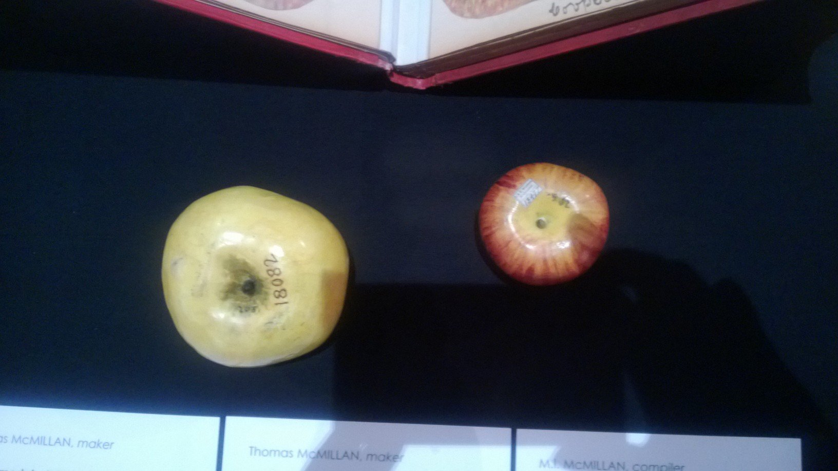 Thomas McMillan, maker.  Apple model – Winter Majetin, Hazelglen, Victoria, 1875.   Wax, pigment.  On loan from Museum Victoria.  The Technological and Industrial Museum's economic botany collection recorded and advertised the economic potential of Australia's agricultural products.  Among these were fruit and vegetables.  In order to demonstrate Victoria's capacity in this area of production, and in the absence of colour photography, the museum commissioned wax models of local specimens.  Trained model makers, many of whom were women, worked in the museum laboratory making models that documented healthy, diseased and unusual examples of fruit and vegetables.  These were placed on permanent display for the education of the general public.  This model is of a Winter Majetin, a cooking apple, which was grown by Charles Draper of Hazelglen in 1875 (Hazelglen was then the district name, later being named Arthurs Creek and Doreen).  Photo taken by Bruce G. Draper at the Royal Botanic Gardens, Kew, England, in the 1990s